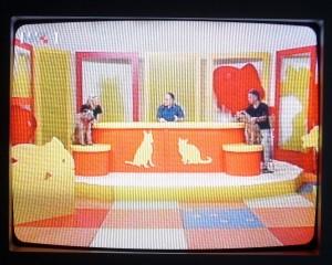 """HTV 1 """"Kućni ljubimci"""""""